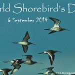 World Shorebird's Day 2014 poster.jpg1