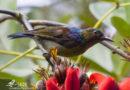 Pengamatan Burung dalam Rangka Hari Batik  di Universitas Brawijaya