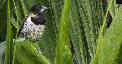 Mengamati Burung di Sulawesi Selatan