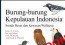 Burung-burung Kepulauan Indonesia – Coming soon!