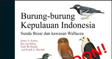Burung-burung Kepulauan Indonesia – Coming soon!
